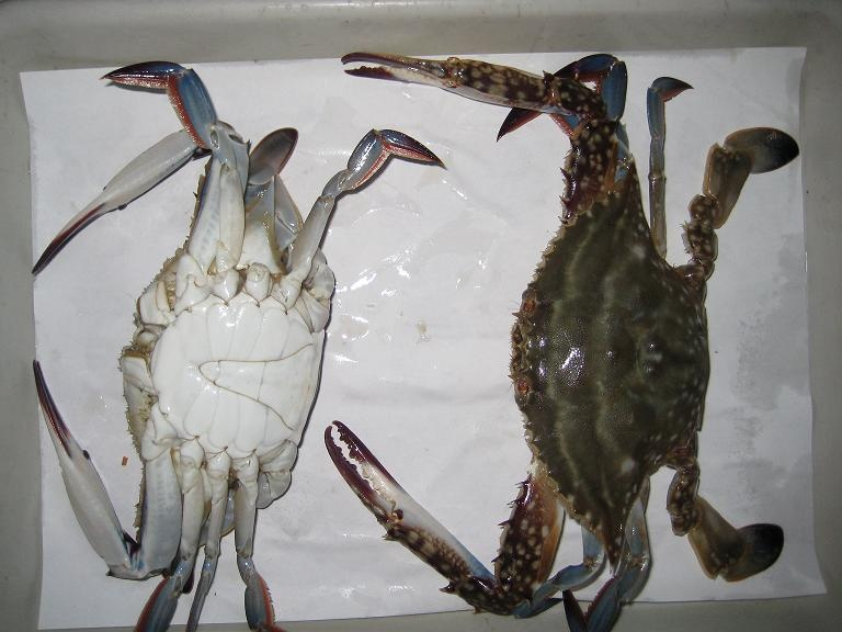 CUTTED CRAB